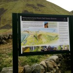 Upright Grey Mares Tail - Moffat