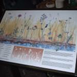 Multiguard® interpretive panels, Chalk Grassland
